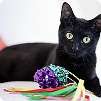 Adopt A Pet :: Indigo - Chicago, IL