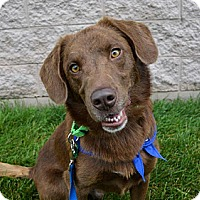 Adopt A Pet :: Buster Brown - Piqua, OH