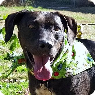 Labrador Retriever Mix Dog for adoption in Elizabeth City, North Carolina - Danny