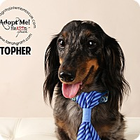Adopt A Pet :: Topher-pending adoption - Omaha, NE