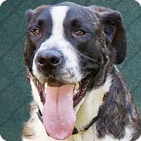 Adopt A Pet :: ZEUS - Glendale, AZ