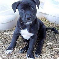 Adopt A Pet :: Jesse - Waller, TX