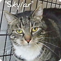 Adopt A Pet :: Skylar - Ocean City, NJ