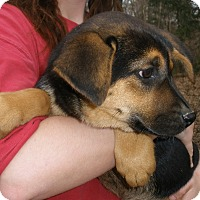 Adopt A Pet :: CANDI - smart & gorgeous - Stamford, CT
