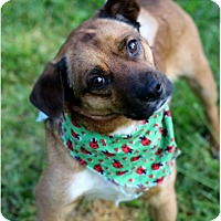 Adopt A Pet :: Marley - Dalton, GA