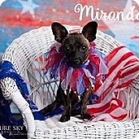 Adopt A Pet :: Miranda - Mesa, AZ