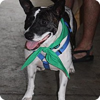 Terrier (Unknown Type, Small) Mix Dog for adoption in Raleigh, North Carolina - Abbey