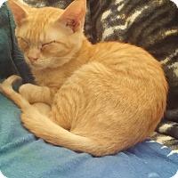 Adopt A Pet :: Venus - San Ramon, CA
