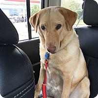 Adopt A Pet :: Lucy #3 - Purcellville, VA