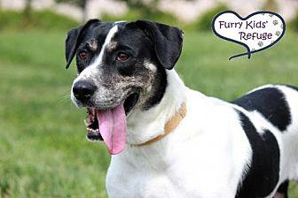 Pointer/Labrador Retriever Mix Dog for adoption in Lee's Summit, Missouri - Carmen