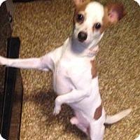 Adopt A Pet :: Rizzo - Pottstown, PA