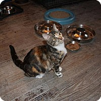 Adopt A Pet :: Melanie - Ann Arbor, MI