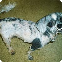 Adopt A Pet :: Spunky - Summerville, SC