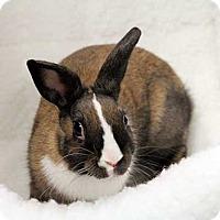 Adopt A Pet :: Jazz - Tustin, CA
