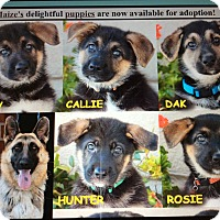 Adopt A Pet :: MAIZE'S 7 PUPPIES - Los Angeles, CA