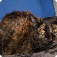 Adopt A Pet :: K-Peanut4-Pretty - Colorado Springs, CO