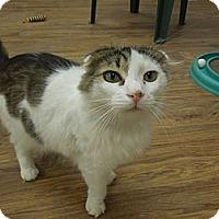 Adopt A Pet :: Zander - Medina, OH
