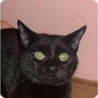 Adopt A Pet :: Dennis - Bedford, MA