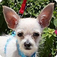 Adopt A Pet :: Reno - Gilbert, AZ