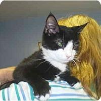 Adopt A Pet :: Peach - Colmar, PA