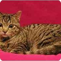 Adopt A Pet :: Jane - Sacramento, CA
