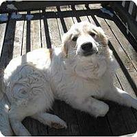 Adopt A Pet :: Yetti - Wayne, NJ