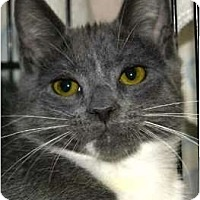 Adopt A Pet :: Bernie - San Ramon, CA