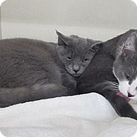Adopt A Pet :: Vasili - Riverhead, NY