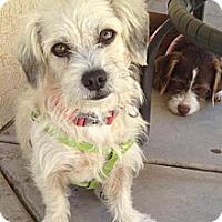 Adopt A Pet :: TRAMP - san diego, CA