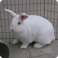 Adopt A Pet :: Arthur - Bonita, CA