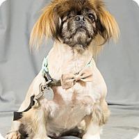 Adopt A Pet :: Bunny - Oklahoma City, OK