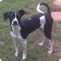 Adopt A Pet :: Carson - North Brunswick, NJ