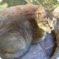 Adopt A Pet :: Nemo - East Hanover, NJ