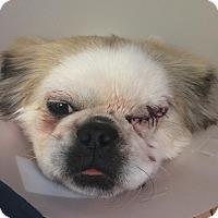 Adopt A Pet :: Holly-One Eye;) - Oak Ridge, NJ