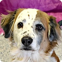 Adopt A Pet :: Franklin - Huntley, IL