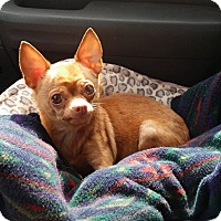 Adopt A Pet :: Lala - Lawrenceville, GA