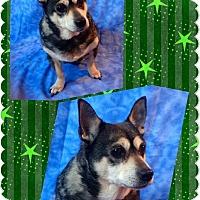 Adopt A Pet :: Frankie - norridge, IL