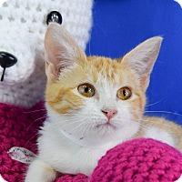 Adopt A Pet :: Danny - Carencro, LA