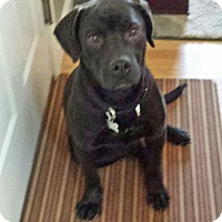 Adopt A Pet :: Diesel - in Maine - kennebunkport, ME