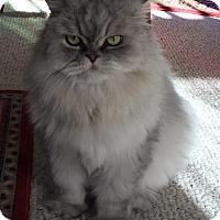 Adopt A Pet :: Jammers - Gilbert, AZ