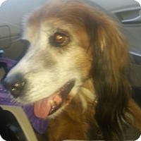 Adopt A Pet :: DAQ - Phoenix, AZ