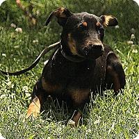 Adopt A Pet :: Addison - Windham, NH