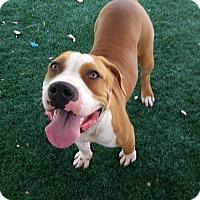 Adopt A Pet :: Belgium - Chula Vista, CA
