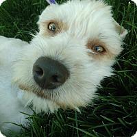 Adopt A Pet :: Tim Allen - Meridian, ID