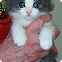Adopt A Pet :: Kayla - Montgomery, IL