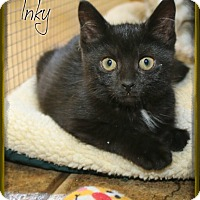 Adopt A Pet :: Inky - Shippenville, PA