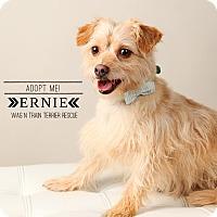 Adopt A Pet :: Ernie-Pending Adoption - Omaha, NE