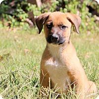 Adopt A Pet :: Poppy - Glastonbury, CT