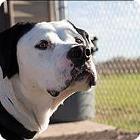 Adopt A Pet :: Dougan (Bosco) - Duluth, MN