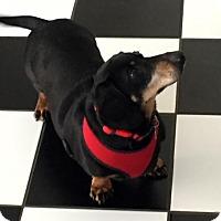 Adopt A Pet :: Pretty Boy - Orangeburg, SC